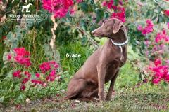 Grace IMG_0459-960