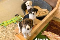 hamish_1