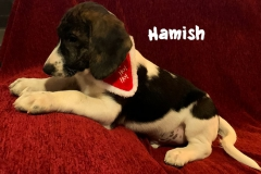 hamish_3