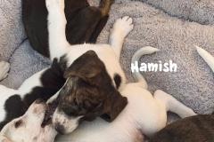hamish_5