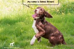 James Brown IMG_2832-960