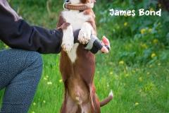 James Brown IMG_2866-960
