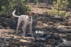 kiko_11