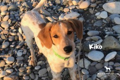 kiko_3