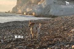 kiko_5