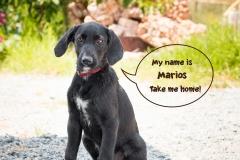 Marios IMG_0522-960