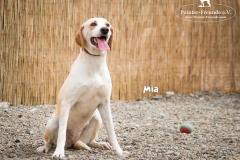 Mia IMG_0063-960