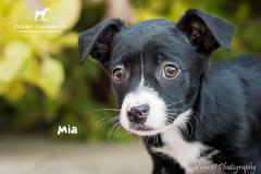 Mia IMG_3617-960