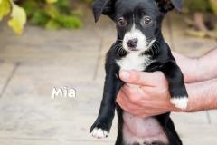 Mia IMG_3622-960