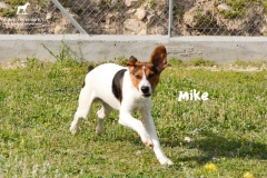 mike_3