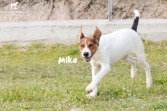 mike_4