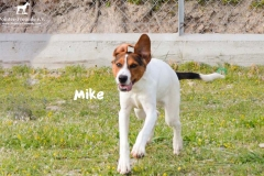 mike_5