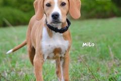 Milo DSC_0474-960
