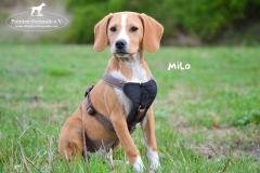 Milo DSC_0502-960