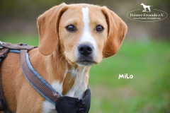 Milo DSC_0509-960