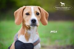 Milo DSC_0514-960