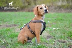 Milo DSC_0522-960