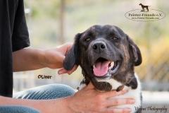 Oliver IMG_0706-960
