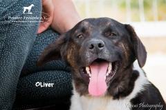 Oliver IMG_0760-960