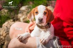 Oscar IMG_0345-960
