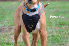 Peterle DSC_0637-960