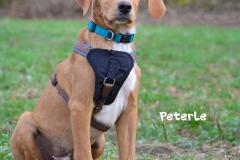 Peterle DSC_0648-960