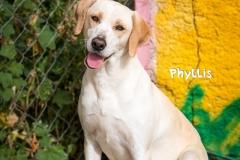 Phyllis IMG_0361-960