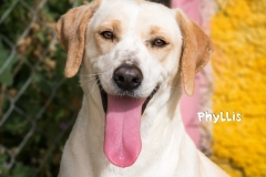 Phyllis IMG_0373-960