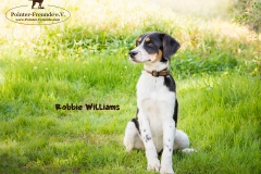 Robbie Williams IMG_3246-960