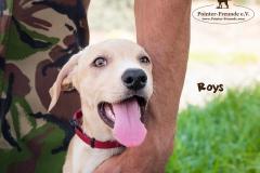Roys IMG_0156-960