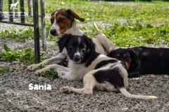 sania_4