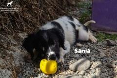 sania_5