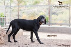 Sebastian IMG_0440-960