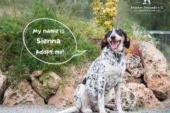 Sienna IMG_0501-960