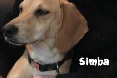 simba_4