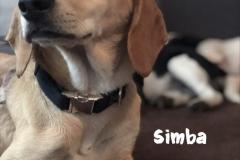 simba_6