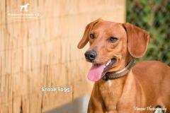 Snoop Dogg IMG_0785-960