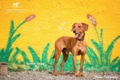 Snoop Dogg IMG_0799-960