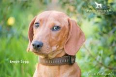 Snoop Dogg IMG_3414-960