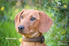 Snoop Dogg IMG_3424-960