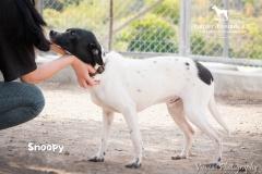 Snoopy IMG_0622-960