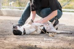 Snoopy IMG_0645-960