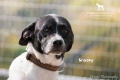 Snoopy IMG_0667-960
