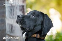 Stevie Wonder IMG_0239-960