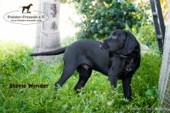 Stevie Wonder IMG_0286-960