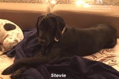 Stevie2 (1)