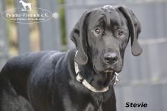 Stevie5