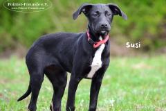 Susi DSC_0786-960