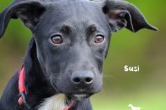 Susi DSC_0793-960