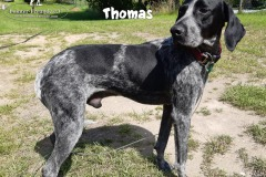 thomas_3